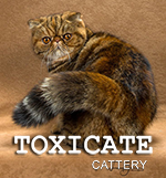 Toxicate Cattery